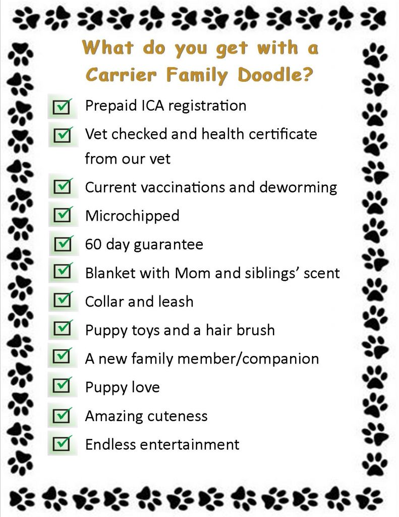 What do you get with a Carrier Family Doodle?