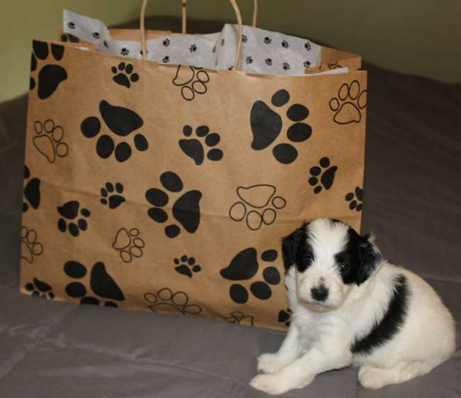 Puppy gift bag from Carrier Family Doodles