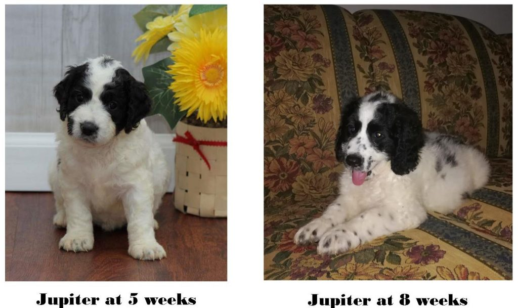 puppy changes in appearance