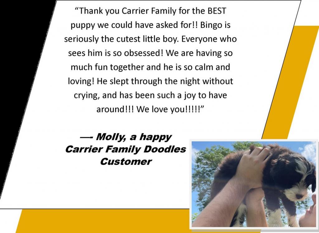 Carrier Family Doodles Testimonials reviews