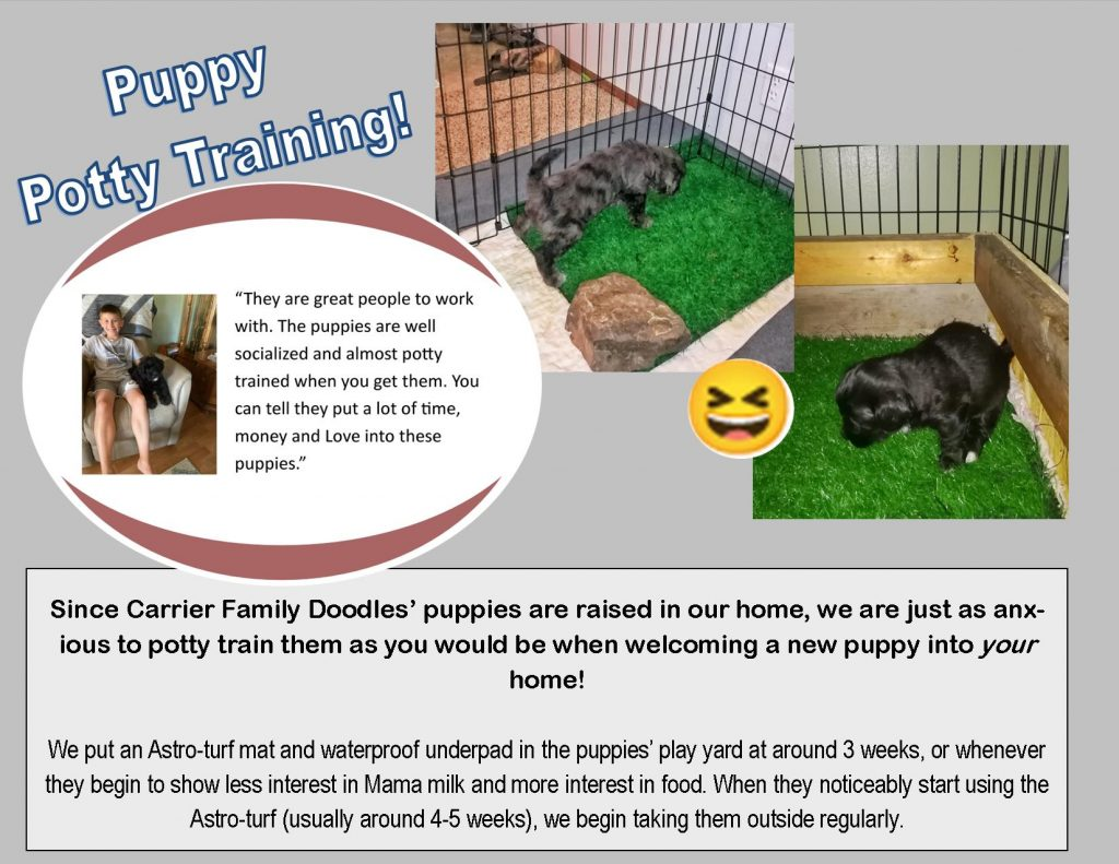 Carrier Family Doodles puppy potty training policy